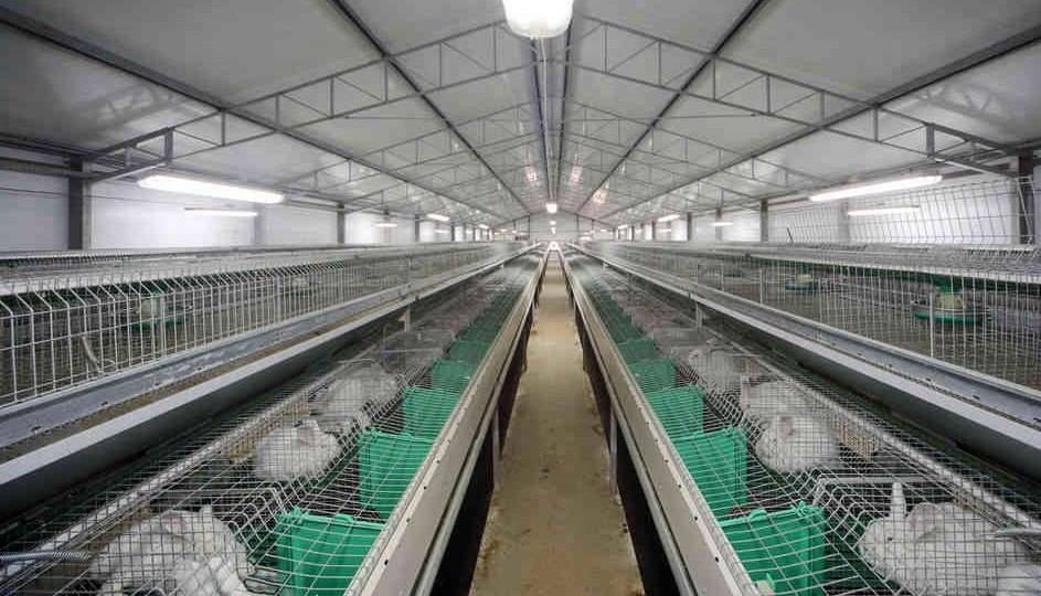 Разведение кроликов как бизнес: особенности и перспективы — cельхозпортал