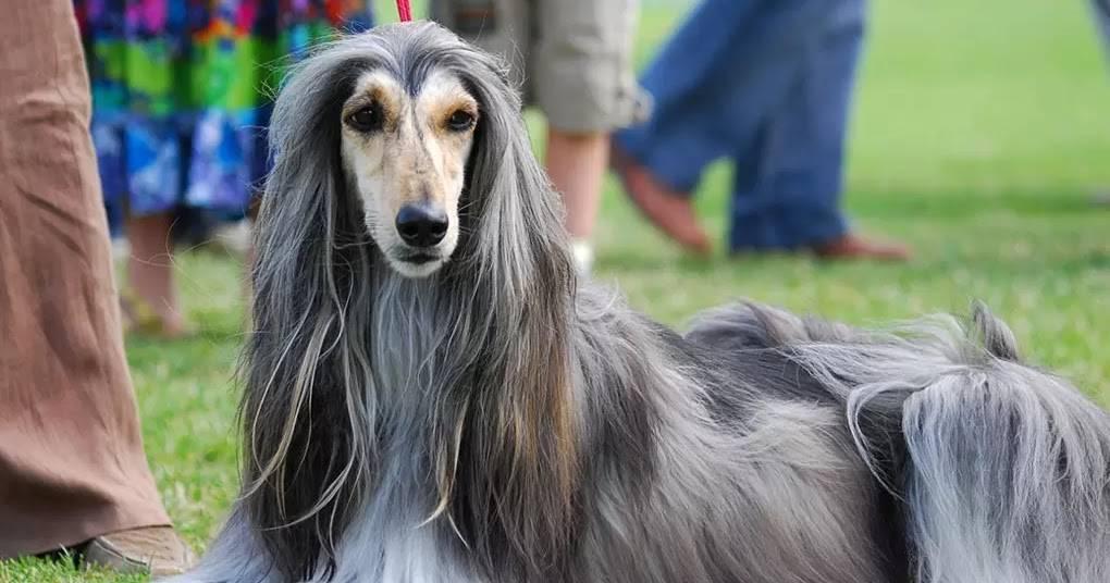 Самая быстрая собака в мире - кому принадлежит рекорд