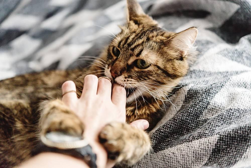 Как отучить кота или кошку царапаться и кусаться, как быть, если постоянно или когда его гладишь царапает и кусает за руки и за ноги котенок