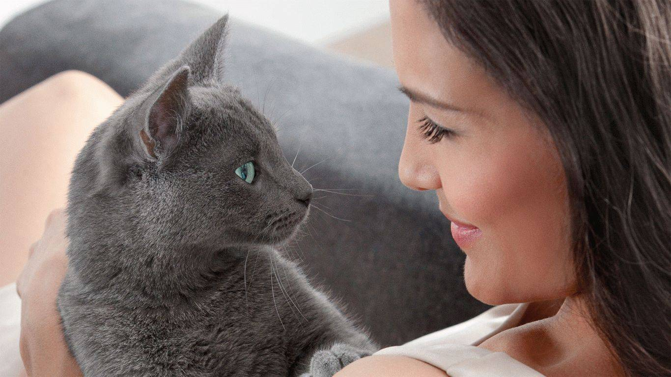 Исследователи доказали: кошки привязаны к хозяевам намного больше, чем собаки