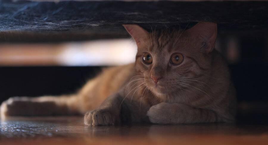 Кот заболел и прячется. кот не ест и не пьет, что делать