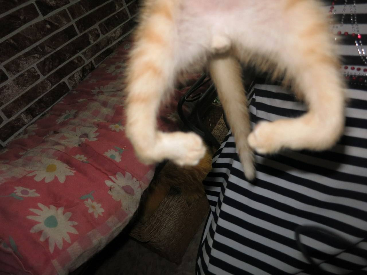 Почему кошки мнут лапами: основные причины, действия хозяина