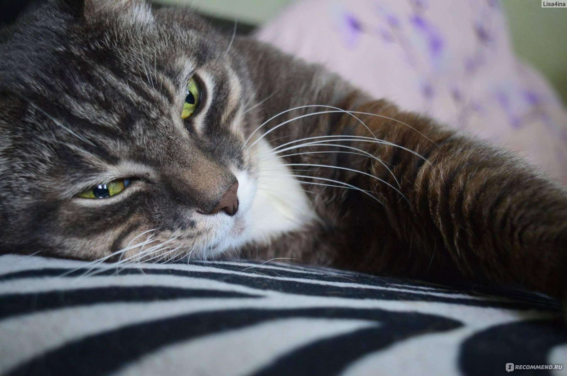 Беспородные кошки: особенности и уход в домашних условиях, содержание кота и его повадки