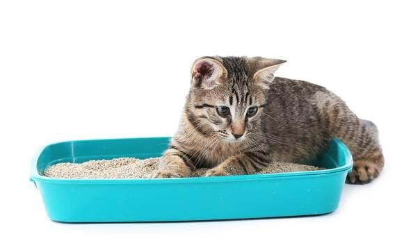Какие бывают закрытые угловые туалеты для кошки с входом и фильтром