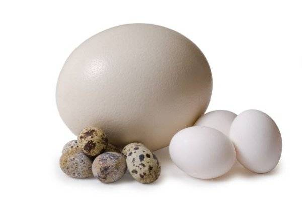 Владельцы ретриверов кладут в пасть собакам яйца из-за старой байки. повторять не советуем