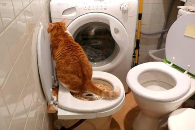 Кот не ходит в туалет по-большому - что делать? кот не ходит в туалет по-большому - что делать?