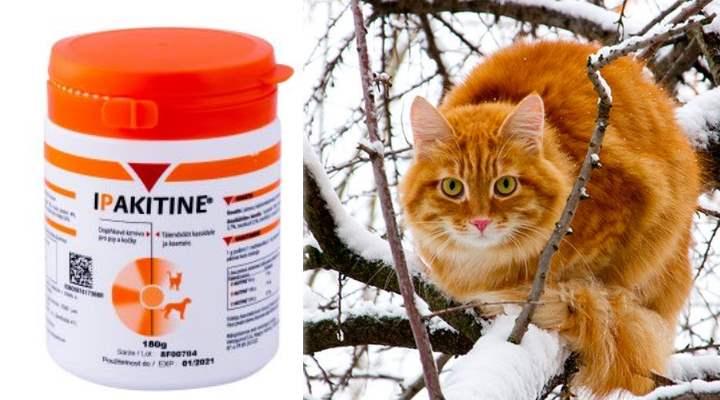 Ипакитине для кошек: инструкция по применению препарата и отзывы покупателей