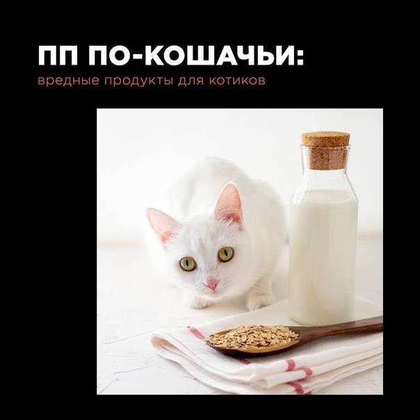 Более 10 безопасных растений для кошек — сайт эксперта по животным