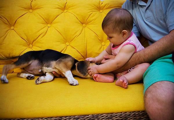 Как уговорить родителей купить собаку: секреты успеха