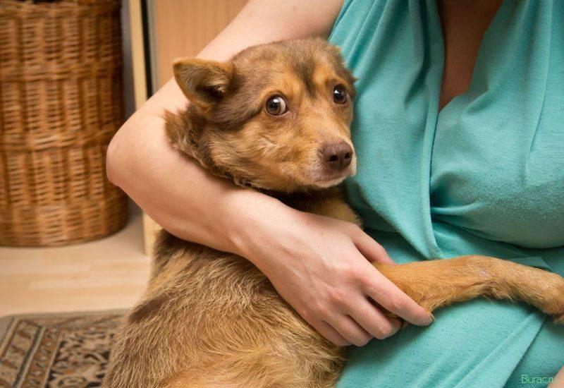 Кашель у собаки: причины, симптомы и лечение