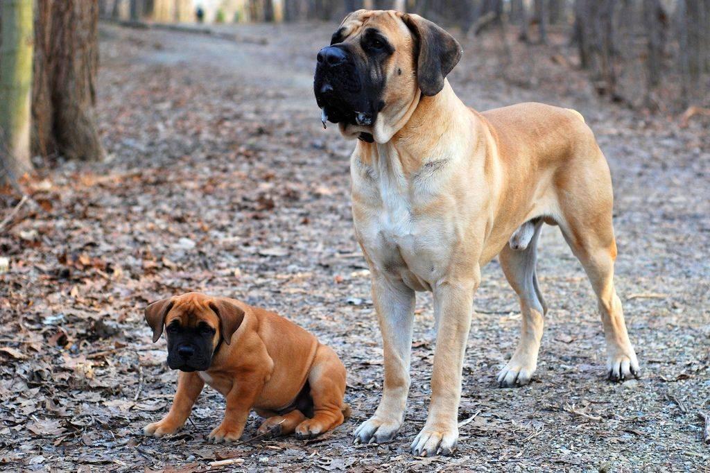 Бурбуль — недооцененные собаки ⋆ собакапедия