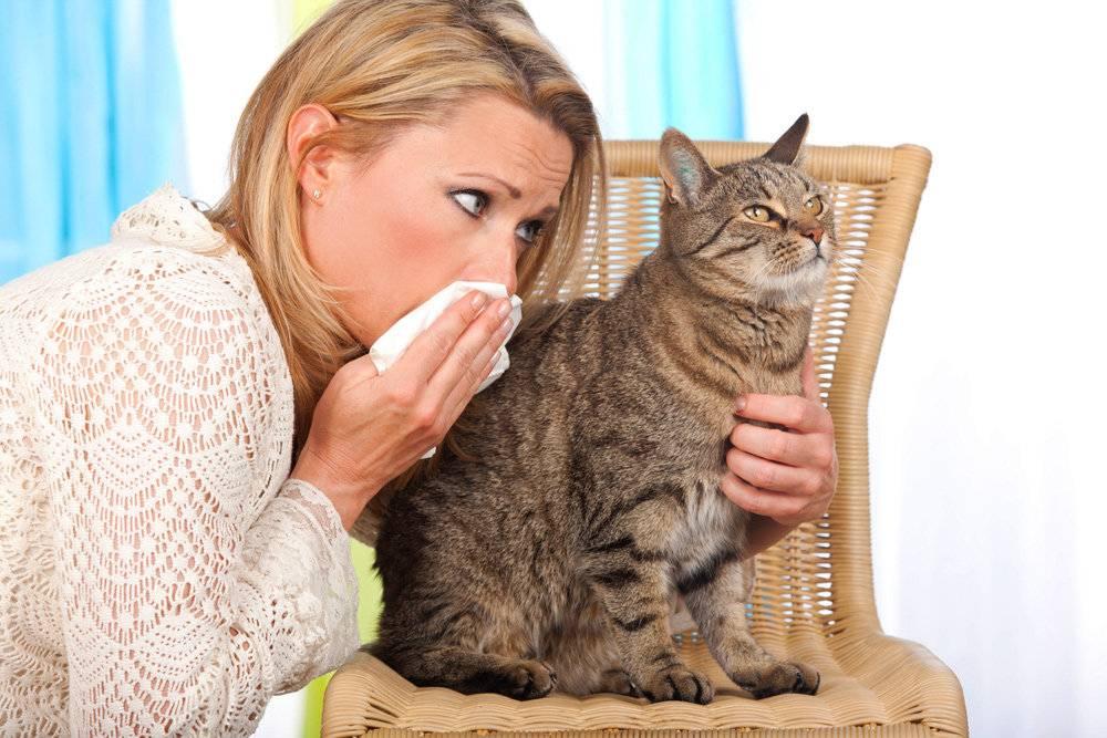 Аллергия на кошку на коже: фото сыпи на руках, а также на других участках тела
