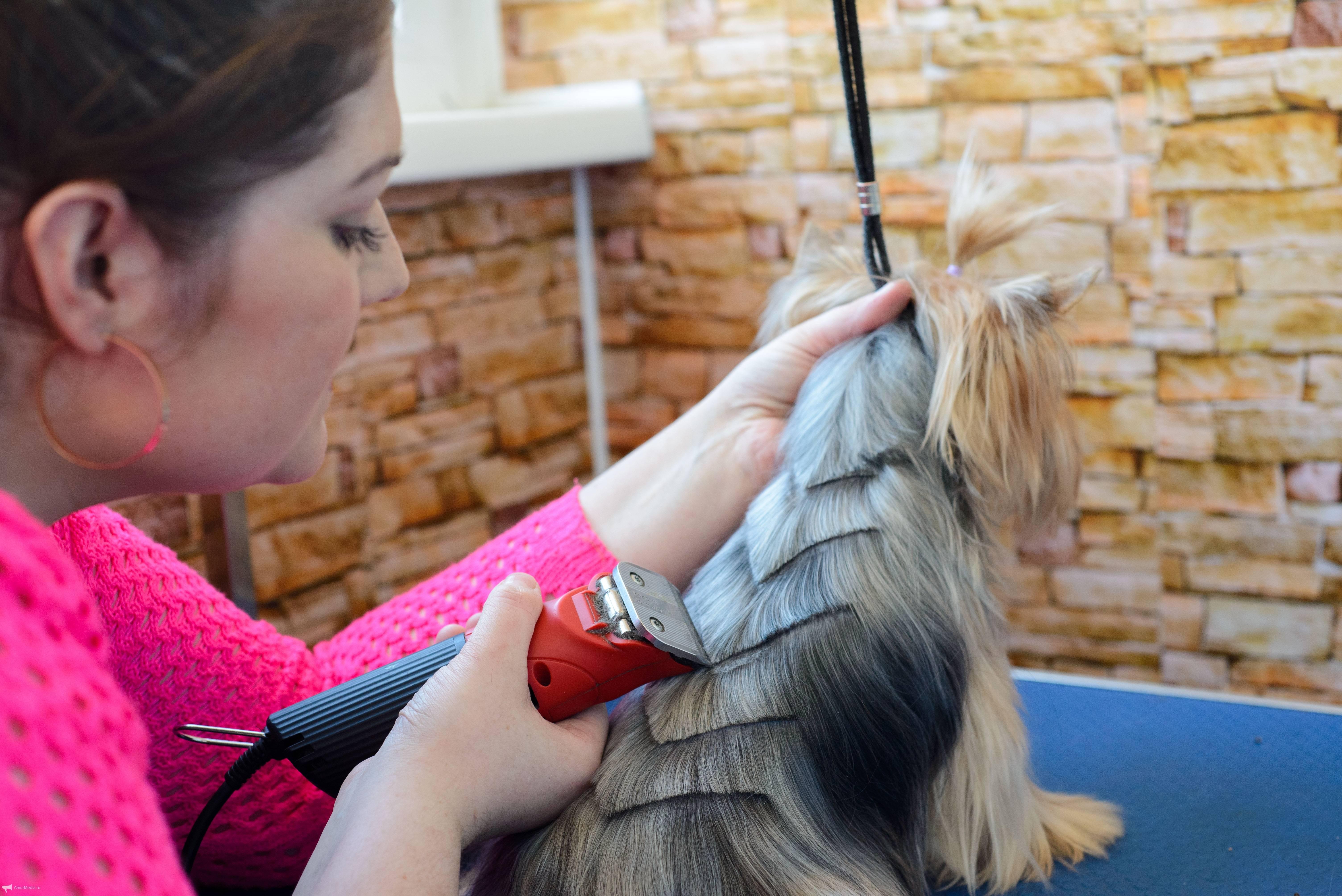 Парикмахер собак как называется. парикмахер для собак – что это за профессия