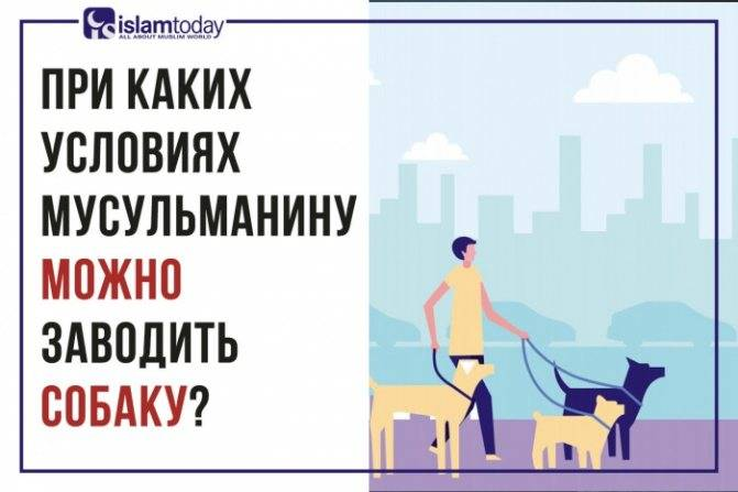 Как мусульмане относятся к собакам? что сказал пророк о собаках? что написано в коране?