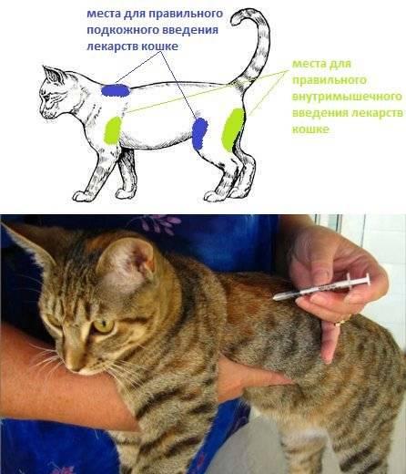 Глюкоза для кошек: инструкция по применению | как колоть раствор, дозировка