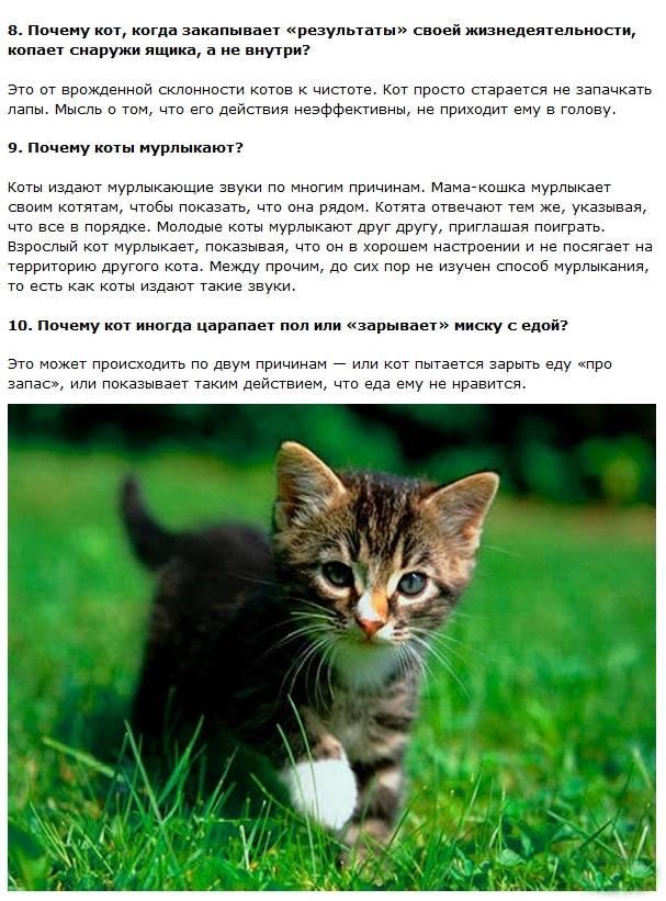 10 интересных фактов о кошках, о которых вы и не подозревали | полезно (огород.ru)