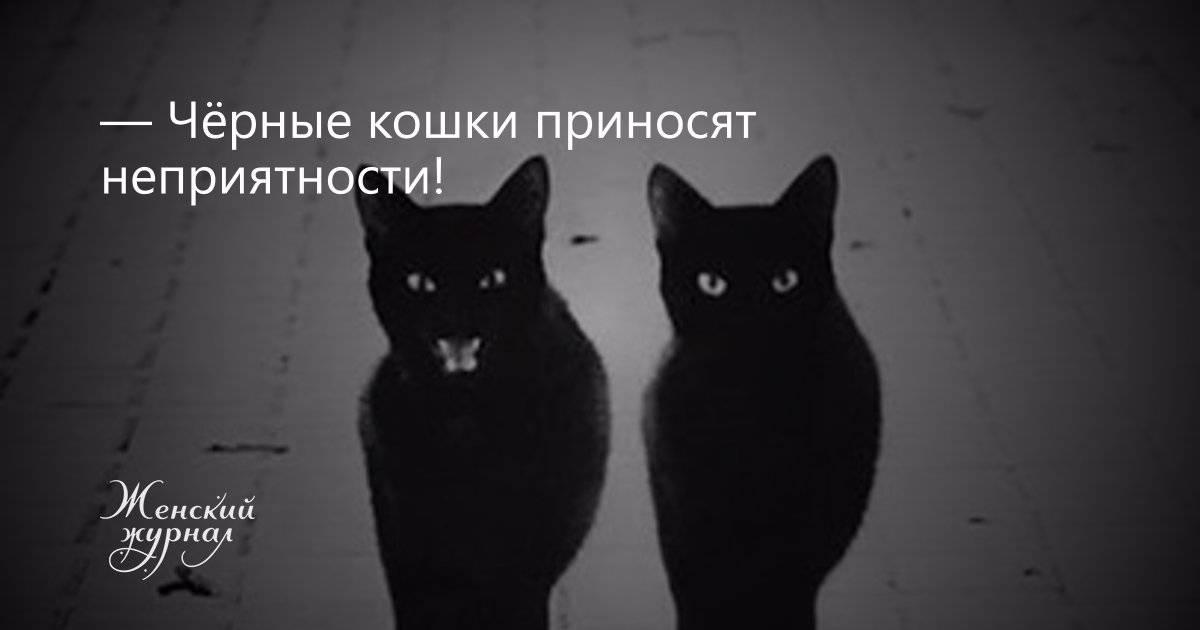 Почему кошка приходит в дом