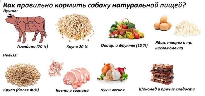 Какое мясо можно давать собаке