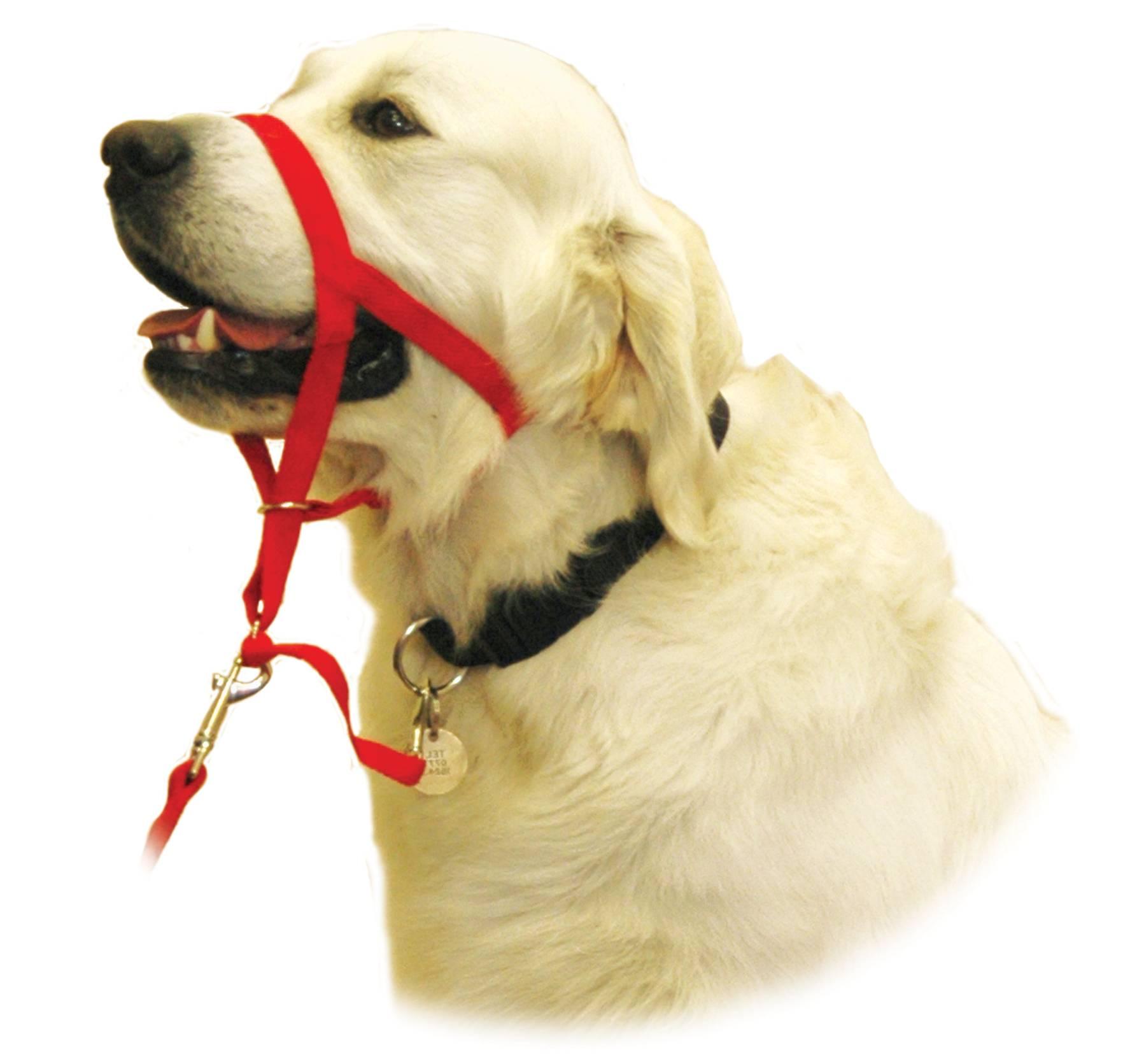 Халти: недоуздок собак как альтернатива наморднику и ошейнику, размеры и цены от halti, trixie