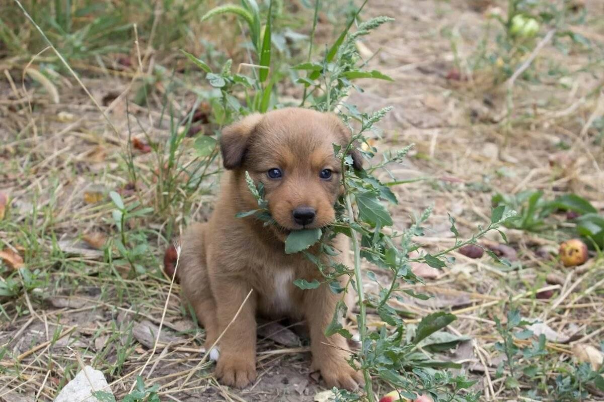 Клички для собак-девочек: красивые редкие и легкие женские собачьи имена, прикольные имена щенков и клички со значением