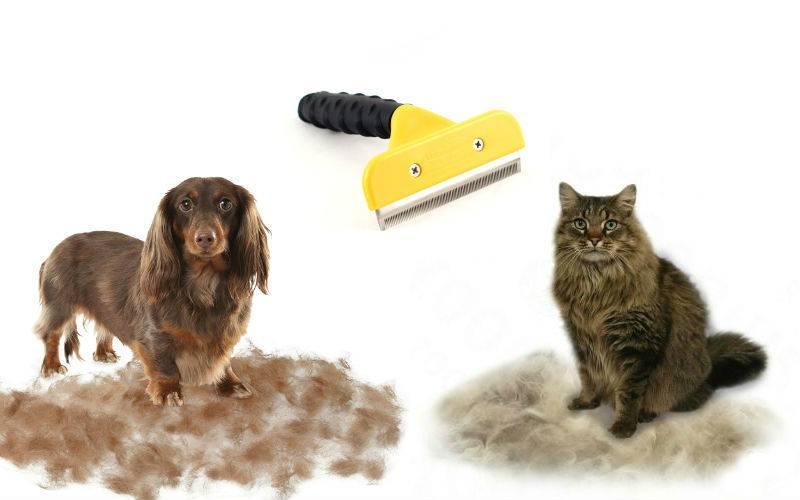 Необходимость стрижки кошки, виды и варианты своими руками в домашних условиях