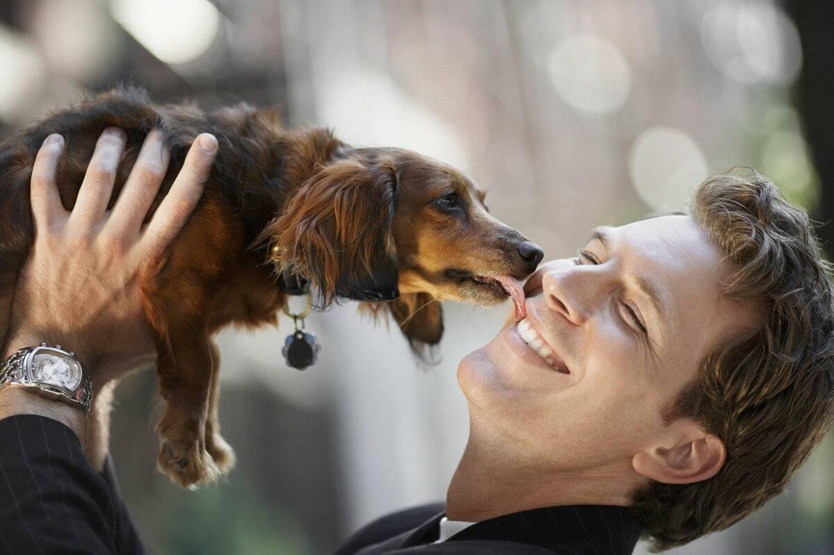 Почему собаки так сильно любят своих людей