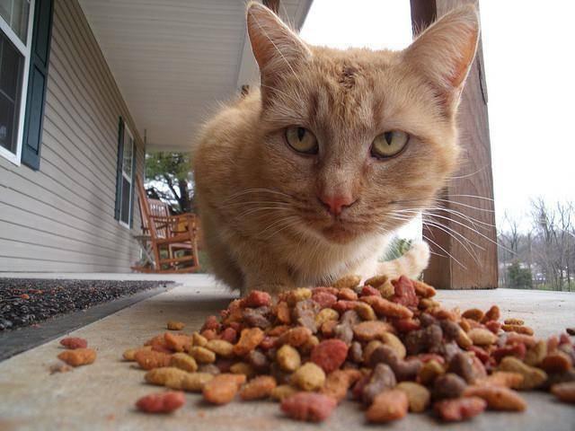 ᐉ как сделать ловушка для кошек схема. ловим кота при помощи ловушек из подручных материалов. лучшая приманка для кошки ✅ igrad.su