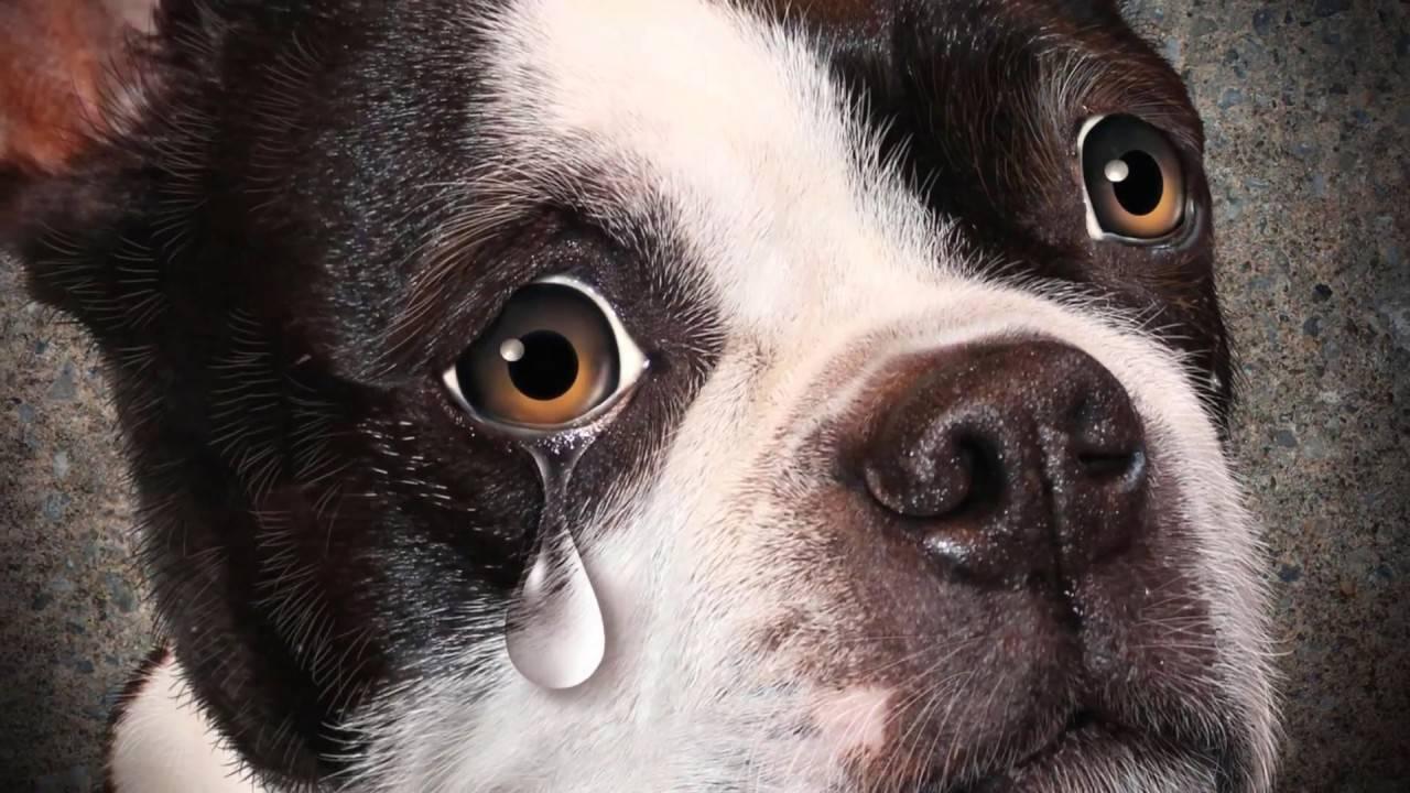 Почему моя собака скулит — причины