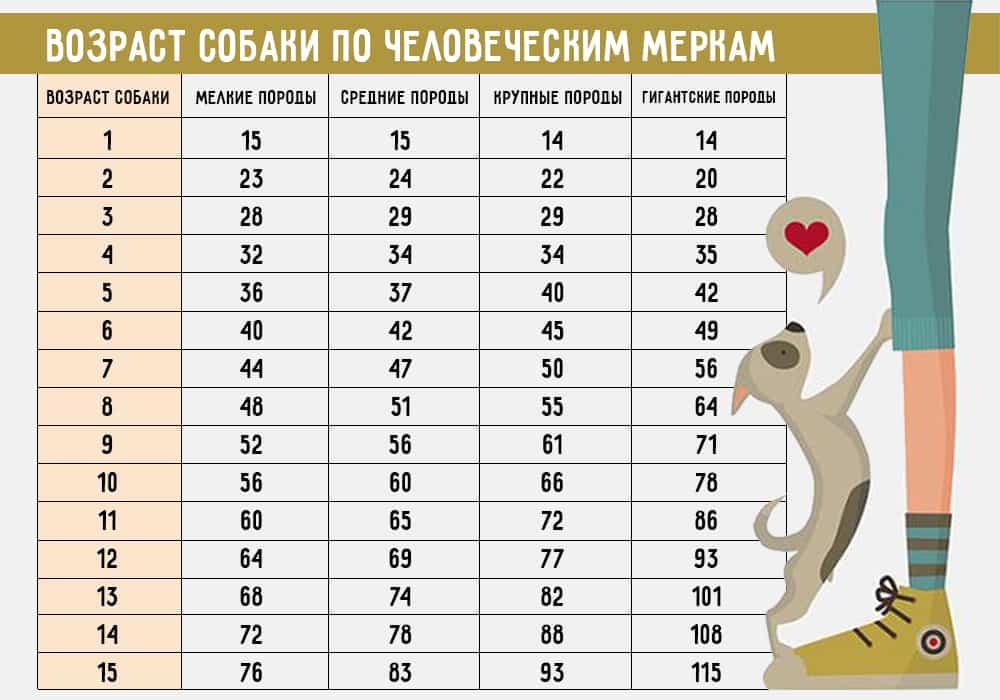 Сколько кошке лет по человеческим меркам