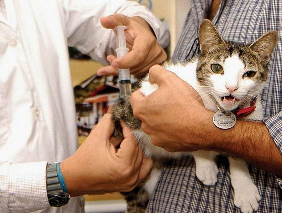 Признаки обезвоживания организма кошки. обезвоживание у кошек. разбираемся в причинах и устраняем последствия