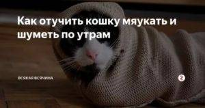 Почему кошка мяукает по ночам?
