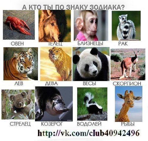 Животные по знакам зодиака | astro7