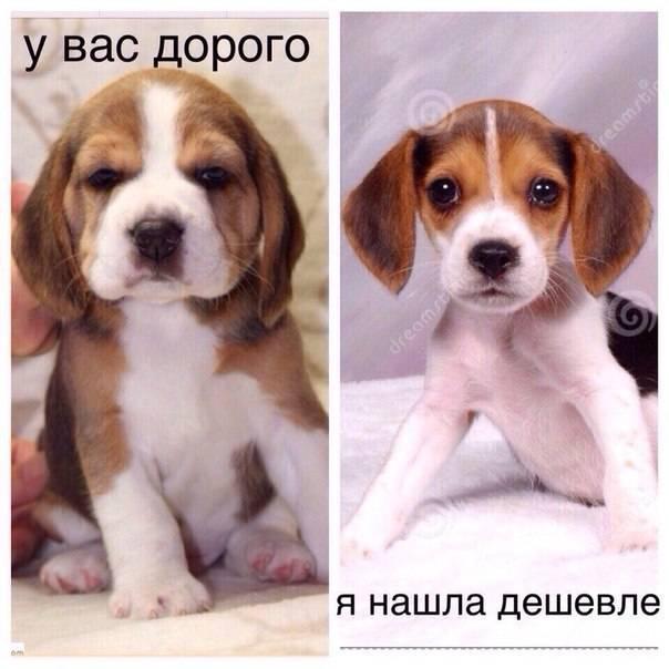 Сколько стоит собака. цены на щенков по породам собак