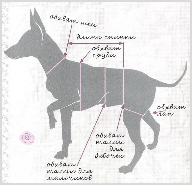 Одежда для маленьких собак, как подобрать с учетом снятых мерок