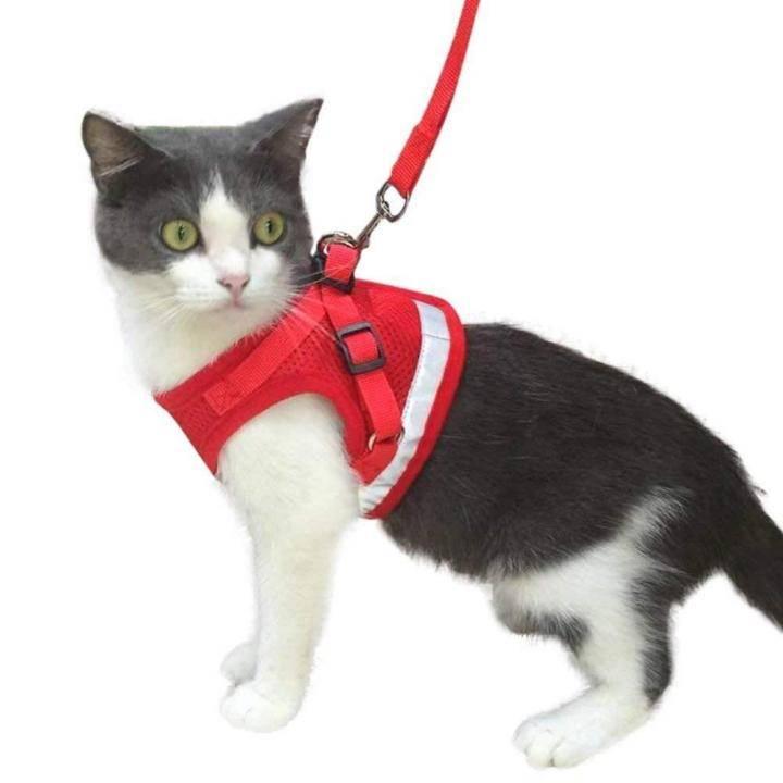Шлейка для кошки и кота: как выбрать, правильно надеть и приучить   фото
