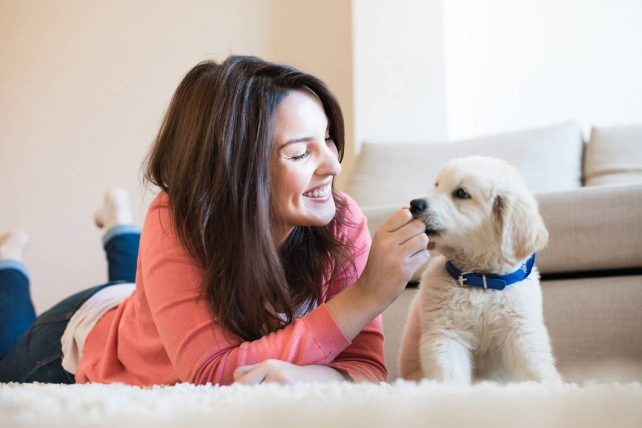 Собака и человек: фото, отношения, причины, особенности