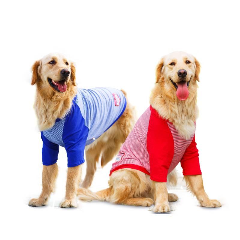 Как выбрать собаку? 53 фото как правильно выбирать щенка для себя из помета? выбор лучшей породы для частного дома и квартиры