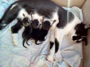 Примеры на какие сутки после рождения у котенка открываются глазки