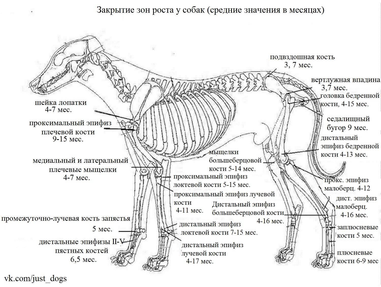 Анатомия лошади: строение черепа, фото и описание костей