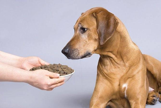 Собака вялая, не ест и не пьёт: почему отказывается от еды и воды, что делать, если нет аппетита, вялость, рвота, сухой нос и другие симптомы