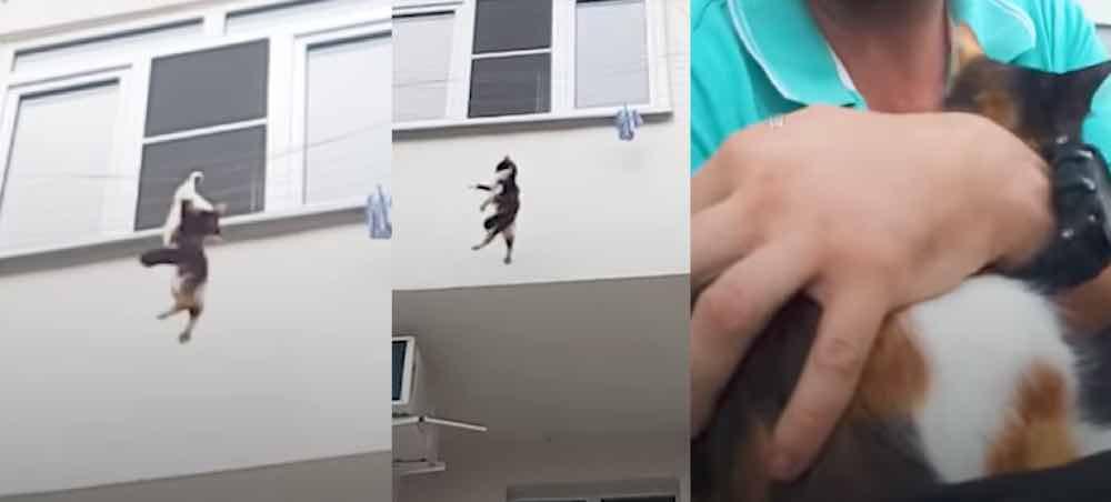 Кот упал из окна: как оказать первую помощь?