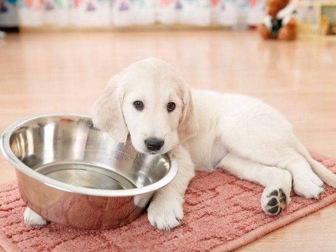 Почему скулит собака: причины — что делать?
