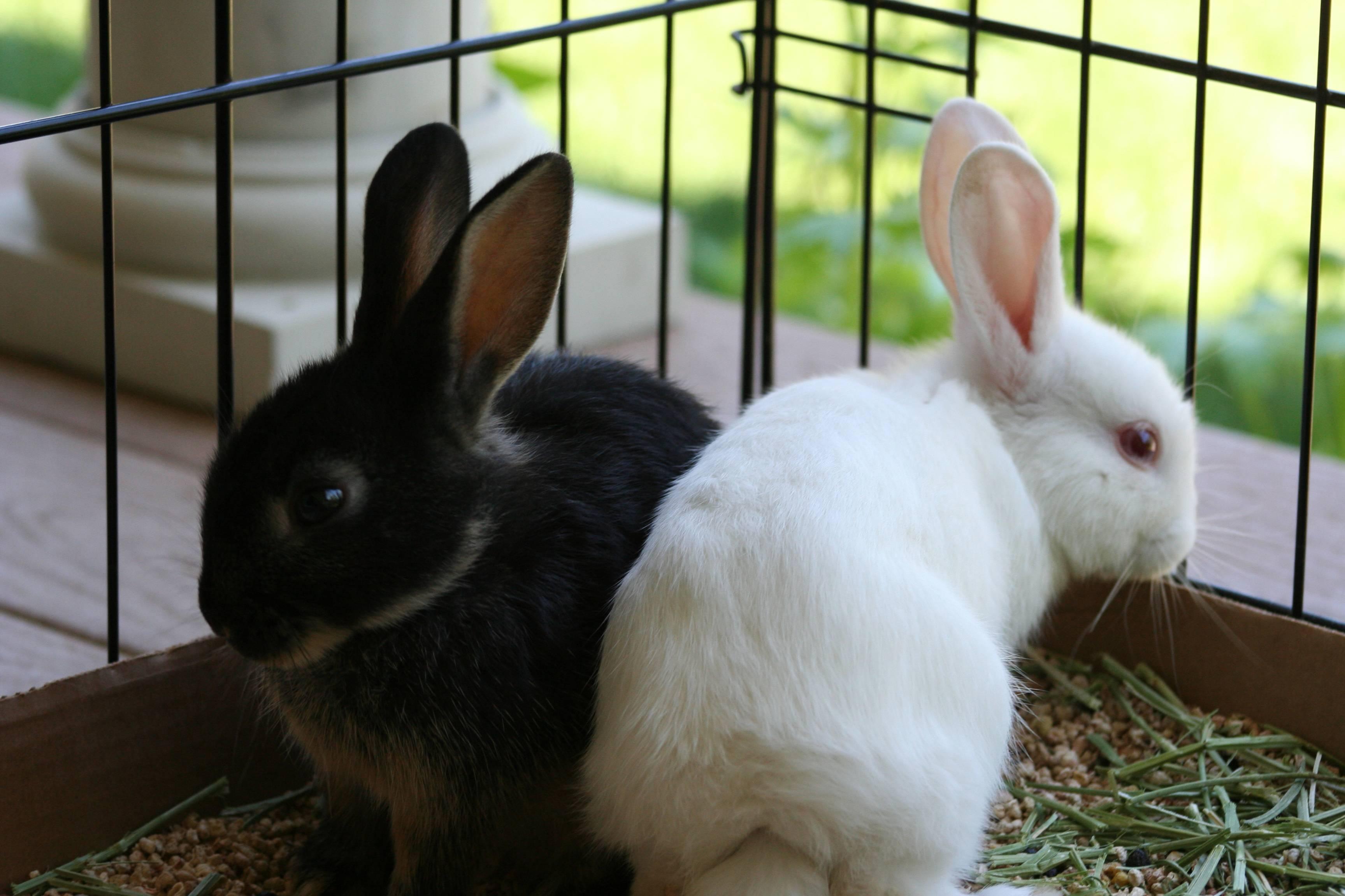 Породы кроликов с фотографиями и описанием