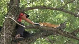 Как снять кошку с дерева, службы снимающие кота с высокого дерева | zoosecrets