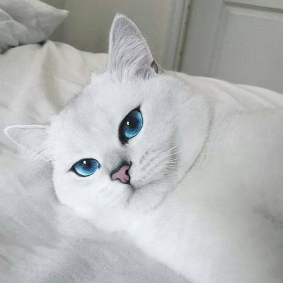 Почему белые кошки с голубыми глазами глухие? — обсуждай