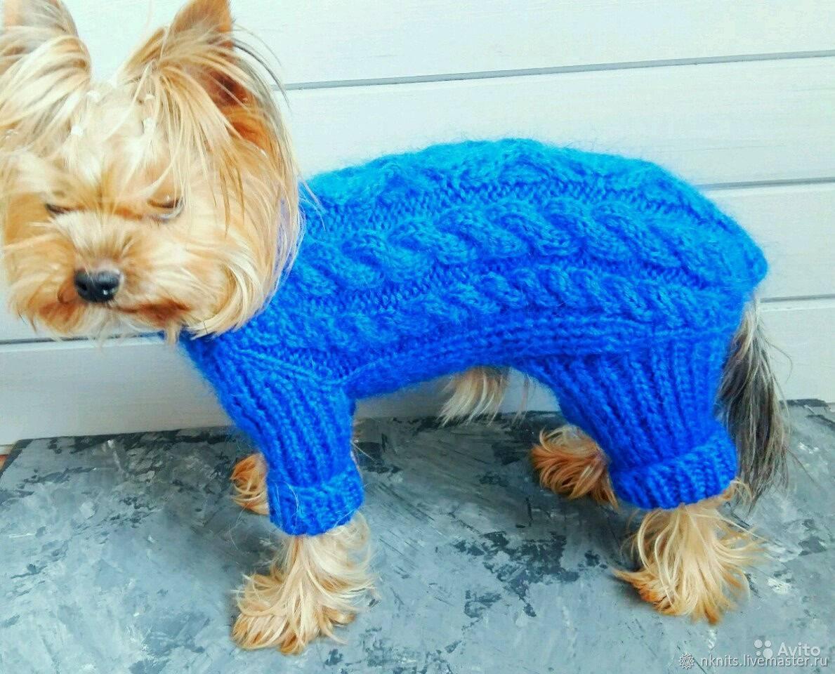 Вязаная одежда для собак спицами: схемы для начинающих