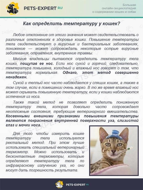 Симптомы и чем помочь коту при отравлении самостоятельно дома без ветеринара