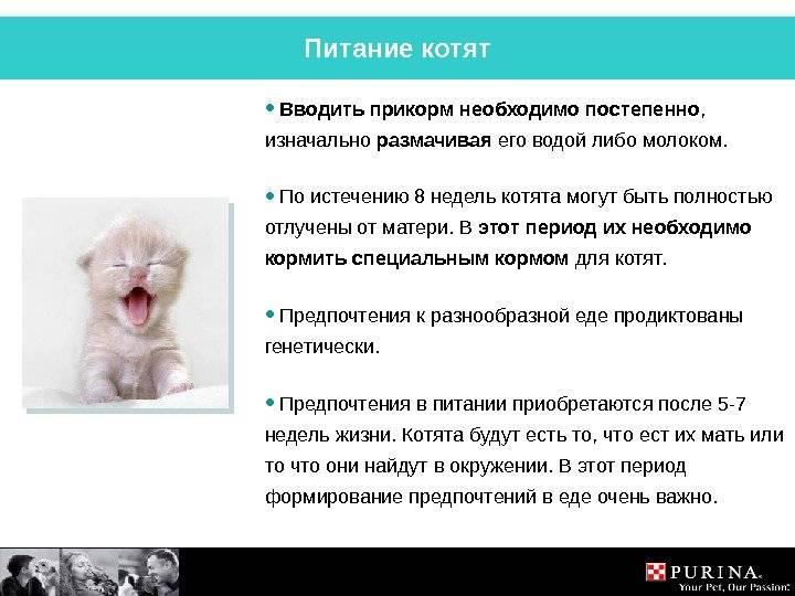 Рвота у кошки причины и лечение