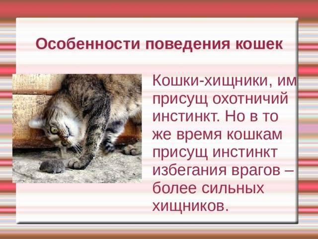 Психология кошек: нужно ли уделять внимание котам? особенности кошачьего поведения. как заботиться о животных?