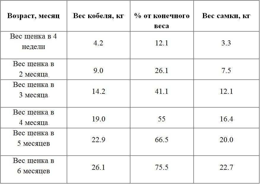 Корм для немецкой овчарки в домашних условиях: таблица норм рациона питания, а также какую пищу давать взрослой собаке и как правильно, лучше натуральную или сухую?